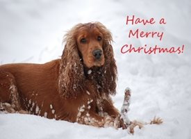 Christmas Merry Christmas Spaniel Dog personalised online greeting card