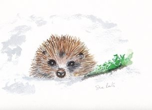 SJB Cards Hedgehog in the Snow Christmas  hedgehog personalised online greeting card