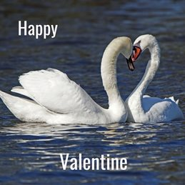 Gary Green Eyes Happy Valentine Valentine Swans Heart Love personalised online greeting card