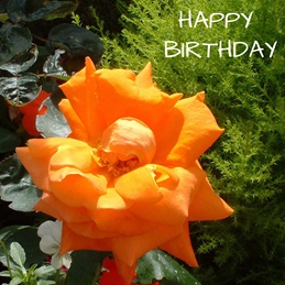 Birthday rose flower plants for-her orange green personalised online greeting card