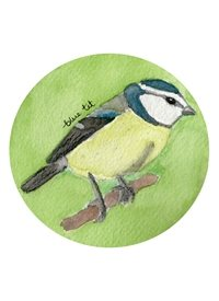 General Blue tit birds wildlife nature garden birds English British birds personalised online greeting card