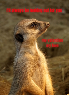 Valentine Valentines meerkats animals for-her for-him personalised online greeting card