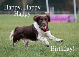 Birthday Cute Dog Spaniel SARR  personalised online greeting card