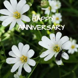 Muckyboots farm cards Happy Anniversary  Anniversary Flowers,   daisy, happy anniversary  personalised online greeting card