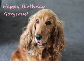 Birthday Cute Spaniel Dog Gorgeous  personalised online greeting card