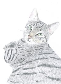 Art tabby cat, cat, furry cat, pet, animal personalised online greeting card