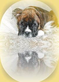 General  greeting cards by Findee Cards Pup Dog Reflections