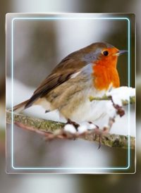 Christmas robin animals z%a personalised online greeting card