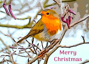 christmas CHRISTMAS Robins redbreast birds nature wildlife seasons greetings Xmas -child personalised online greeting card