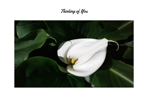 Thinking for-him for-her white flowers personalised online greeting card