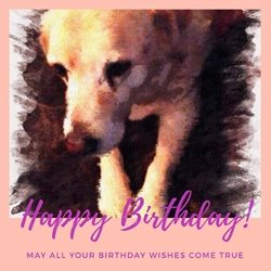 ALL Dog and Cat Rescue (ADCR) Watercolour dog Birthday Dog animal cute  love personalised online greeting card