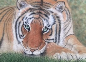 Art tiger big cat  wildlife animal art personalised online greeting card