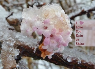 General love rain shine snow ice hail blossom winter pink white brown for-her for-him heart  personalised online greeting card