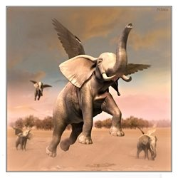 General fly elephant surreal nature animal dreaming fantasy personalised online greeting card