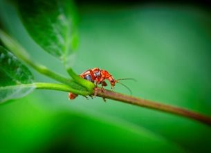 Photography wild, life, wildlife, macro, photography, macro photography, mini, beast, mini beasts, insect, insects, common, solider, beetle, beetles, close, up, close up, green, greens, orange, bug, bugs,  personalised online greeting card
