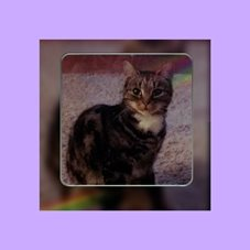 general cats kittens animals  personalised online greeting card