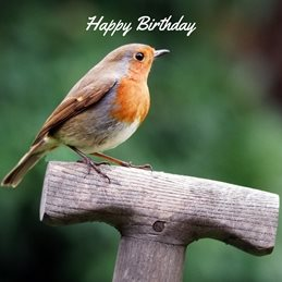 Birthday Robin spade Garden Bird personalised online greeting card