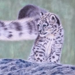 art snow leopard cub wildlife animal personalised online greeting card