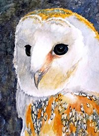 art owls birds wildlife animals dad son  granddad  uncle mum daughter Nan aunt friend personalised online greeting card