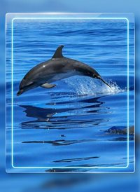 General water dolphin z%a personalised online greeting card