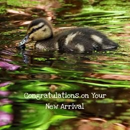 Gary Green Eyes Duckling in Spring baby Duckling Mallard Spring personalised online greeting card