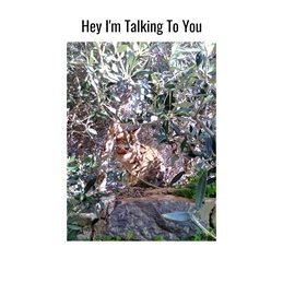 General cats camouflage olive trees  personalised online greeting card