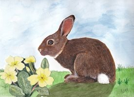 SJB Cards Rabbit and Primroses art Bunny Rabbit Primroses Spring  easter personalised online greeting card