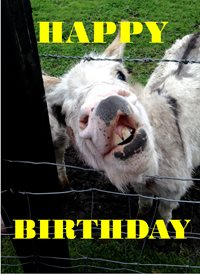 Birthday FUNNY HUMOUR ANIMALS CUTE Goat  personalised online greeting card
