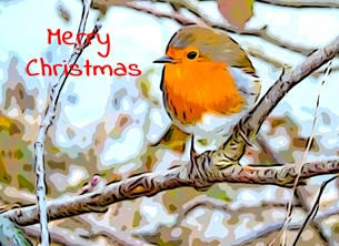 christmas CHRISTMAS Robins birds nature wildlife Xmas seasons greetings redbreast  -child personalised online greeting card
