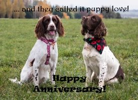 Anniversary Puppy love  spaniel cute dog SARR personalised online greeting card