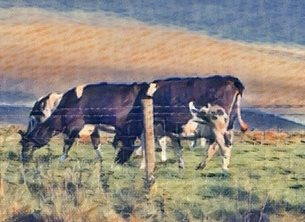 General beach, north west coast, cow, milkers, farmer, lake district, grass, frield, fence personalised online greeting card