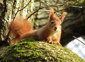 photography  Red Squirrel Peekaboo natural animals z%a personalised online greeting card