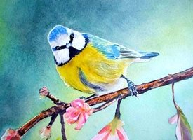 art tit birds wildlife for-her personalised online greeting card