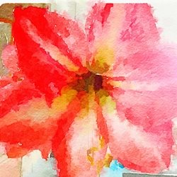 art Amaryllis red flower head watercolour bloom nature personalised online greeting card