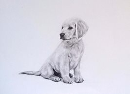 EmilyJane Labrador Puppy art artwork dog animals pets Labrador monochrome for-him for-her for-children personalised online greeting card