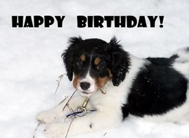 Birthday Snow Spaniel Dog  Cute personalised online greeting card