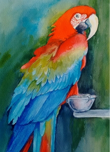 Tessa Spanton Artist Scarlet Macaw General Art bird, scarlet macaw, nature. personalised online greeting card