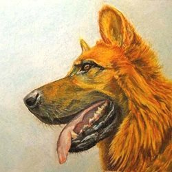 General artwork Alsatian dog pets animals for-him for-her personalised online greeting card