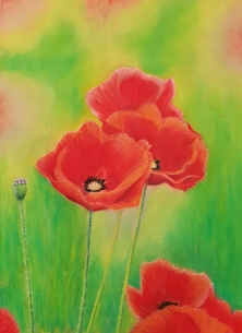 art poppy red poppies flowers art  personalised online greeting card