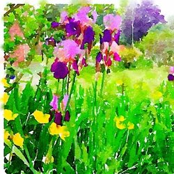 Art Iris watercolour spring flowers birthday anniversary  personalised online greeting card