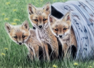 art fox cubs wildlife animal art personalised online greeting card