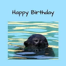 Birthday seals animals sealife mammals sea personalised online greeting card