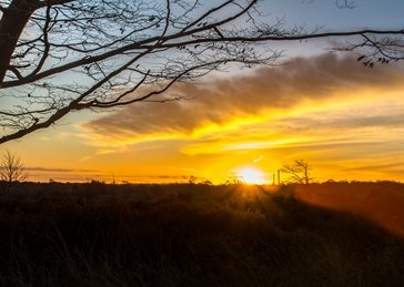 Photography sunrise, sun, cannock, chase, landscape, outdoors personalised online greeting card