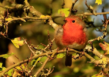 Photography Robin, Bird, Bushey Park, Hawthorne Tree personalised online greeting card