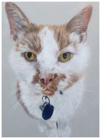 Art cat, cat painting, cat card personalised online greeting card