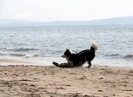 Debbie Daylights Dog on beach Photography dogs beach sea sand summer seaside for-him for-her personalised online greeting card