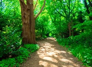 Photography UoR University Reading nature walk path green trees undergrowth landscape spring happy opportunity for-him for-her personalised online greeting card