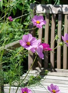 Photography General pink