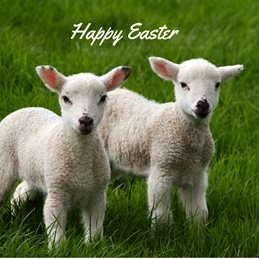 easter photography Lambs Sheep personalised online greeting card