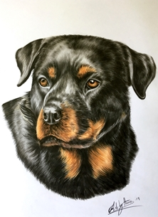 Art By Three  Rottweiler Art rottweilers rottie dogs pets animals for-him personalised online greeting card